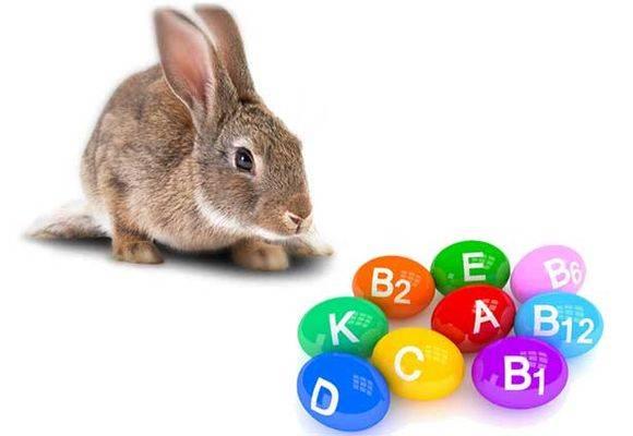 Витамины для кроликов: какие и для чего