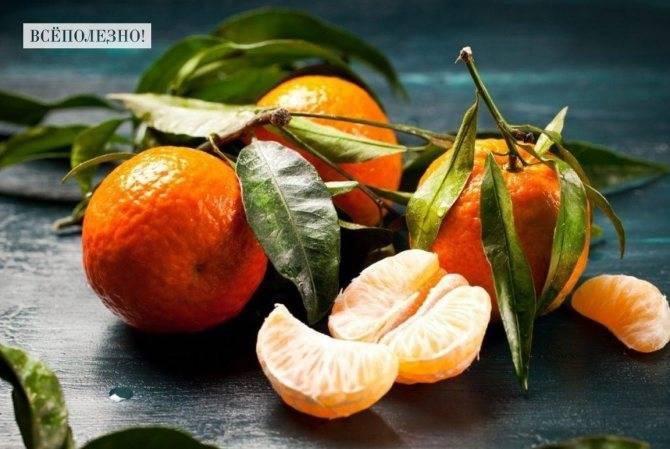 Мандарины — польза фрукта для организма человека