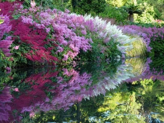 Многолетние теневыносливые цветы для сада: виды и описание растений