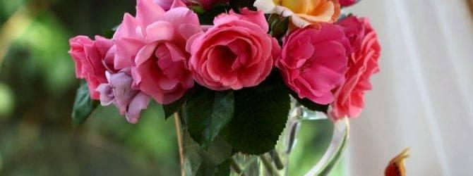 Как сохранить розы в вазе, что добавить в воду, чтобы долго стояли
