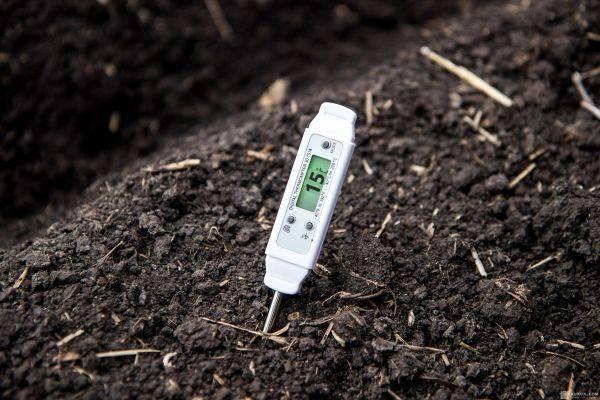 Тыква: посадка в открытый грунт, выращивание из семян