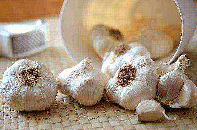 Выращивание чеснока: секреты посадки, выбор сорта и правильный уход для получения лучшего урожая | огородники