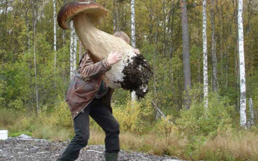 Самые грибные и ягодные места ленинградской области