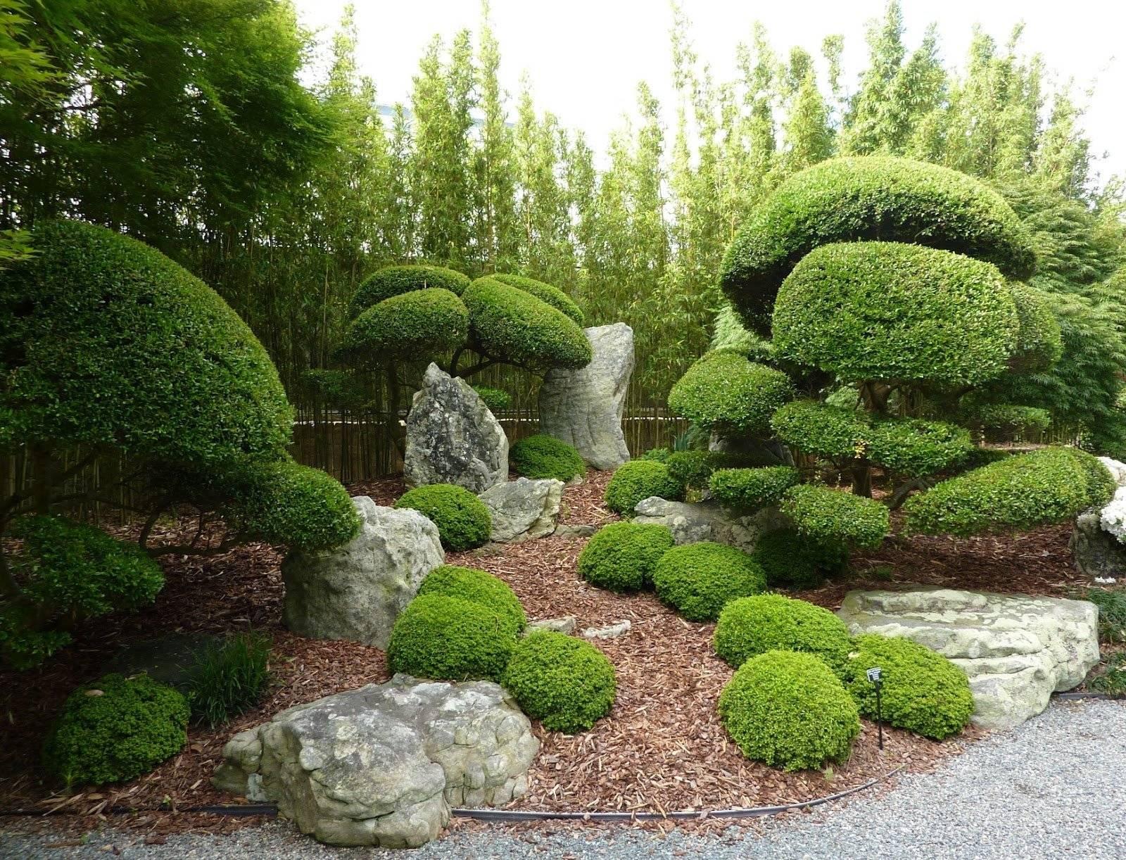 Карликовые деревья для дома: особенности ухода и фото уютных вариантов