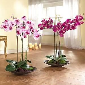 Можно ли пересаживать, если орхидея цветет: стоит ли переместить в другой горшок, после покупки в магазине или когда она выпустила стрелу, как правильно это делать? selo.guru — интернет портал о сельском хозяйстве