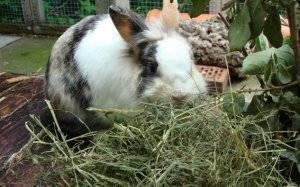 Окрол крольчихи: полезные советы и время