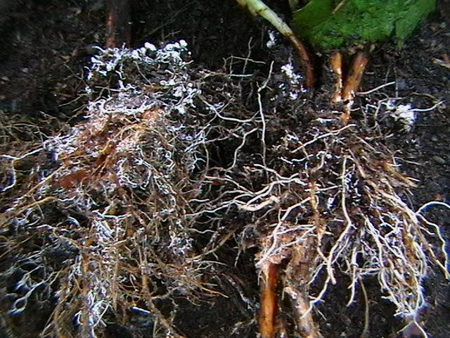Особенности симбиоза гриба и водорослей