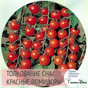 К чему снятся помидоры: красные, свежие, на кустах, в банке, на грядке