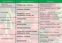 Как проводить обработку смородины осенью от болезней и вредителей