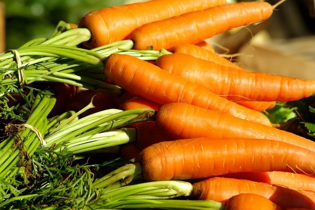 Когда выкапывать морковь с грядки осенью и как ее хранить