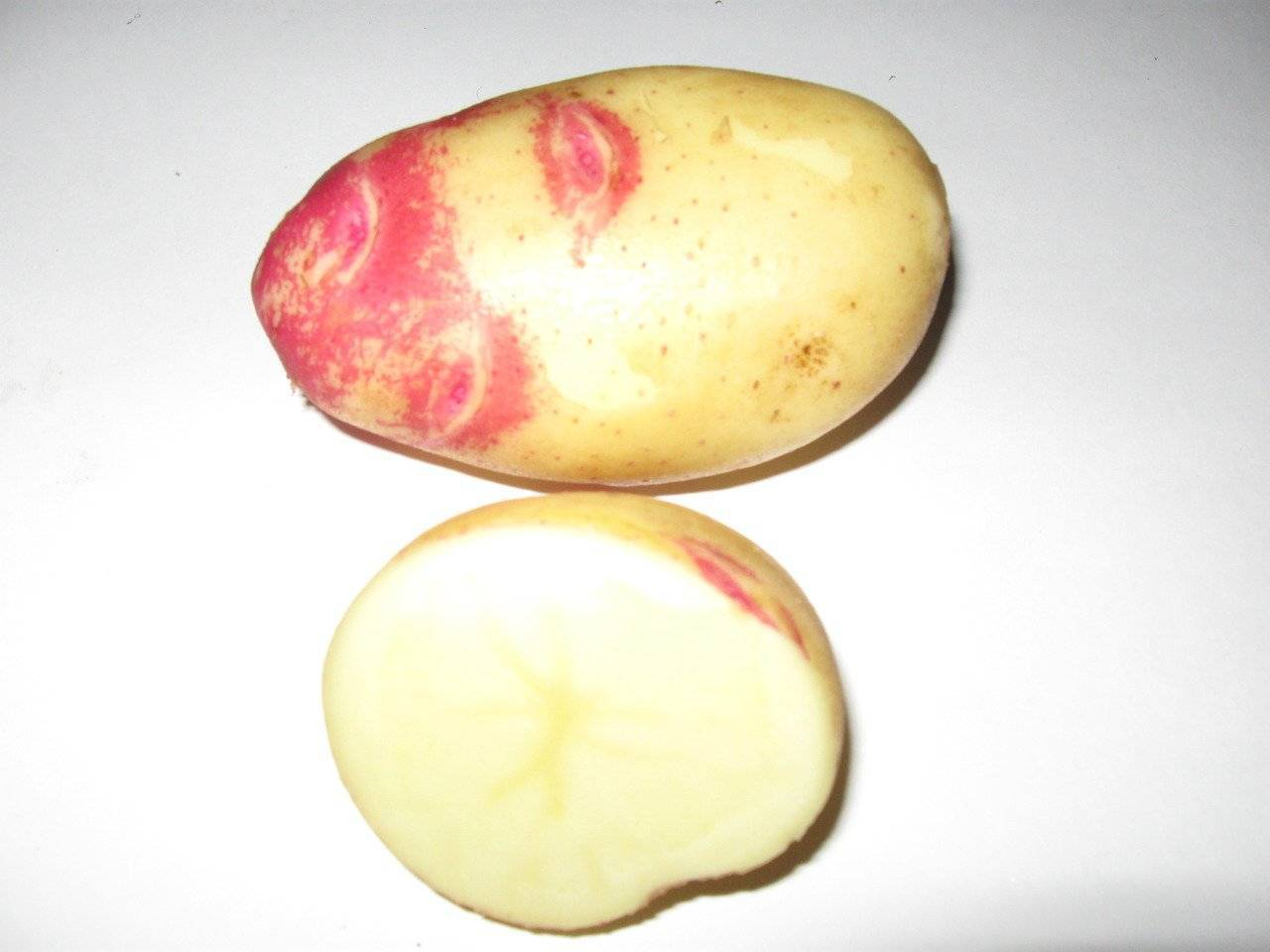 Картофель адретта: описание и характеристика сорта, фото, отзывы