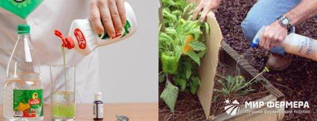 Соль и уксус от сорняков - огород, сад, балкон - медиаплатформа миртесен