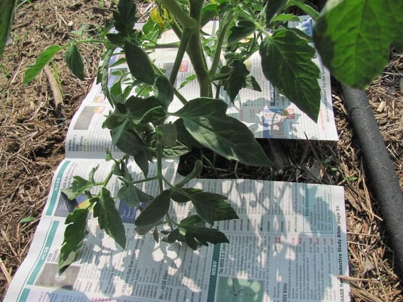 Метод галины кизимой - огород без хлопот