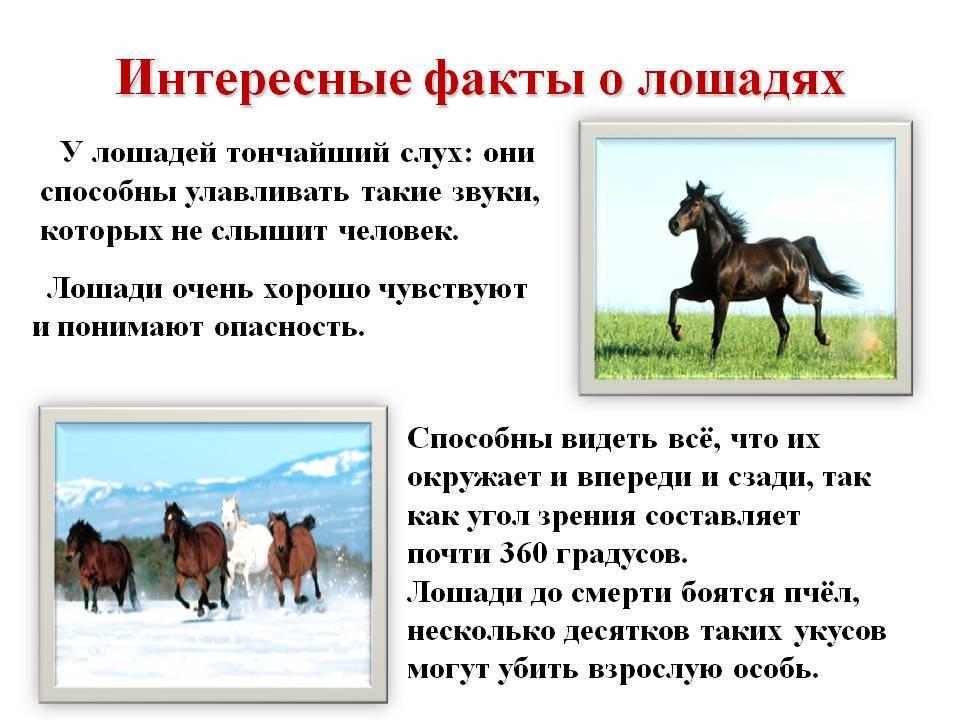 Интересные факты о верховой езде и конном спорте