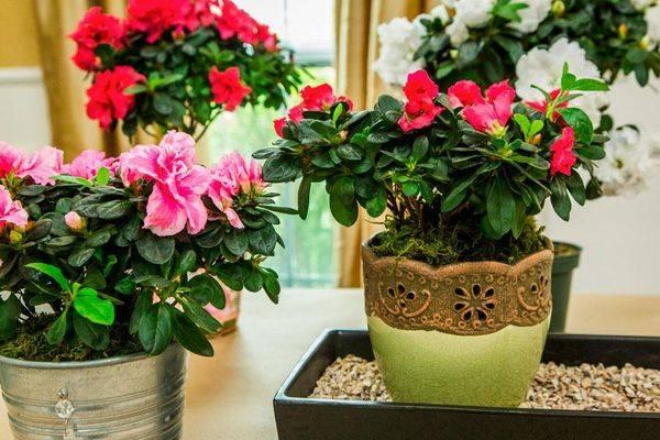10 лучших красивоцветущих комнатных растений. список названий с фото — ботаничка.ru