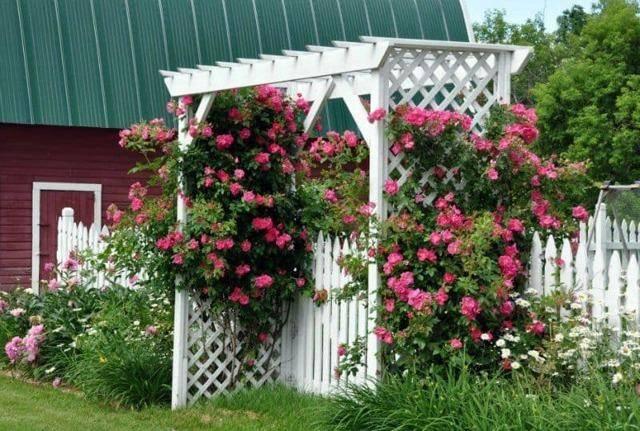 Обрезка роз для новичков: правила проведения процедуры весной