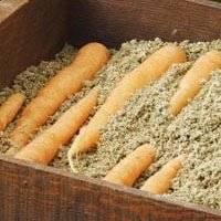 Хранение моркови зимой в погребе, подвале