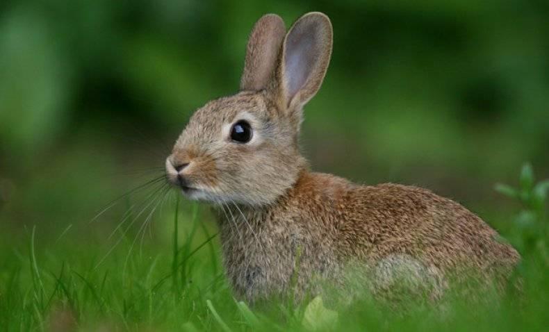 ᐉ можно ли кроликам давать лопухи? - zooon.ru