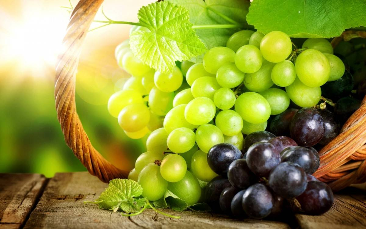 Обрезка винограда весной видео для начинающих