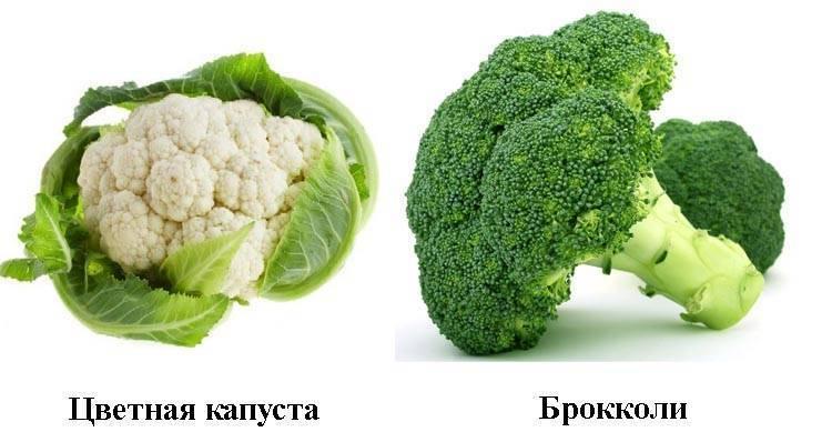 Брокколи: как выглядит, виды и сорта - sadovnikam.ru