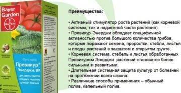 Препарат для защиты растений превикур отзывы - товары для дома - первый независимый сайт отзывов россии