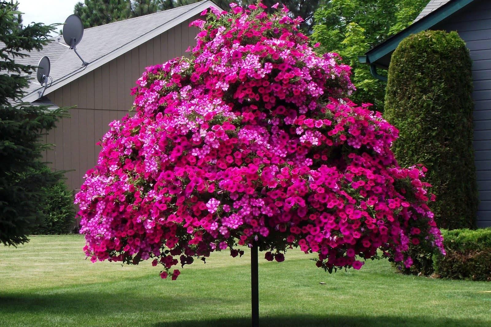 Чем подкормить петунию для обильного цветения — подкормки и удобрения для пышного роста