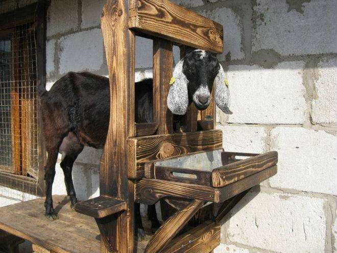 Описание станка для дойки коз