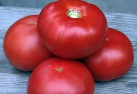 Томат кибо характеристика и описание сорта. что представляет собой томат кибо?
