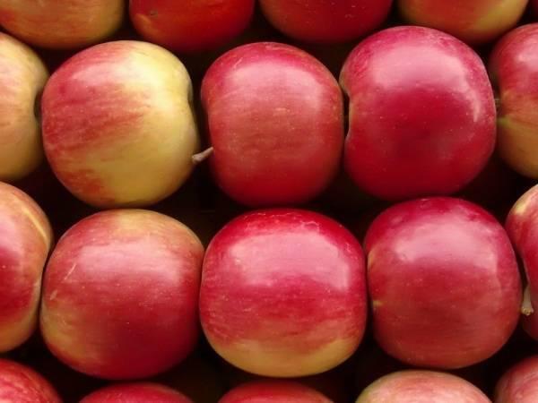 Яблоки айдаред: 50 фото, ? описание, посадка и уход, полезные свойства