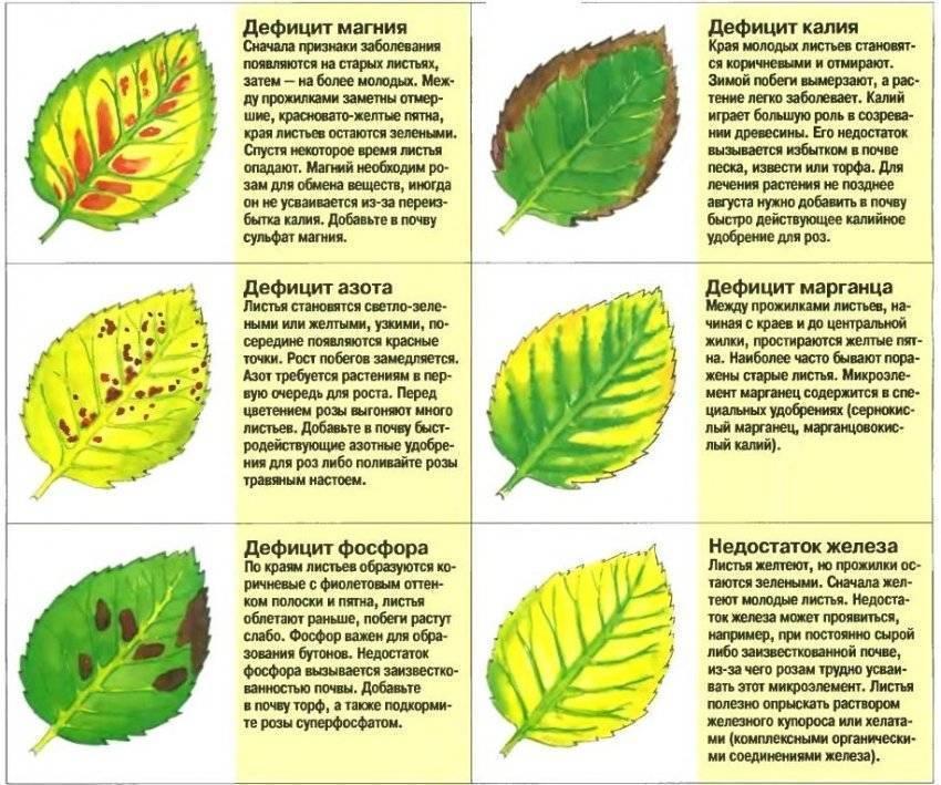 Чем подкормить малину осенью, как подготовить к зиме?