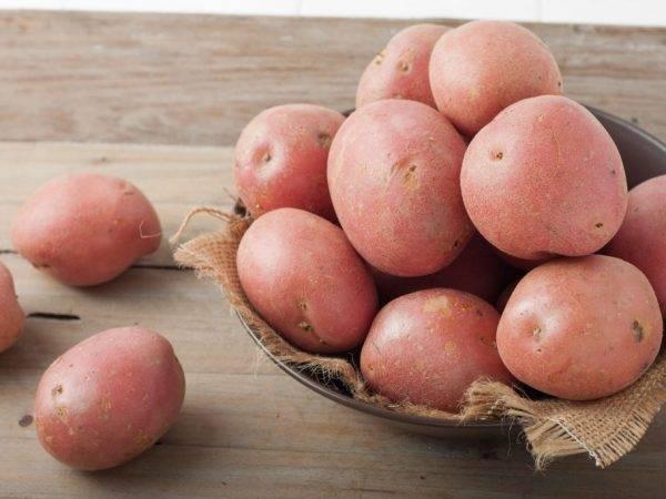 ᐉ сорт картофеля «кемеровчанин» – описание и фото - roza-zanoza.ru