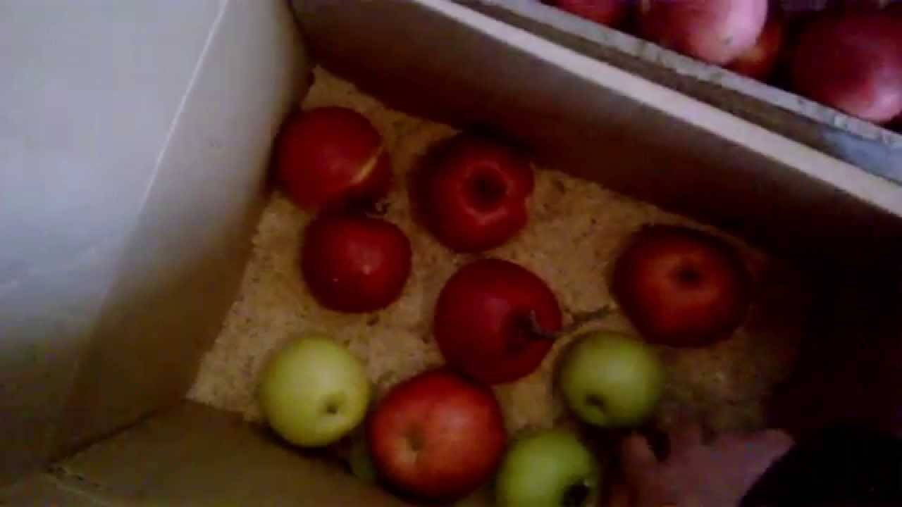 Как сохранить урожай яблок до весны