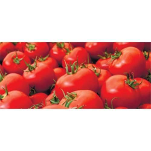 Томат маэстро f1: описание и характеристика крупноплодного сорта с фото