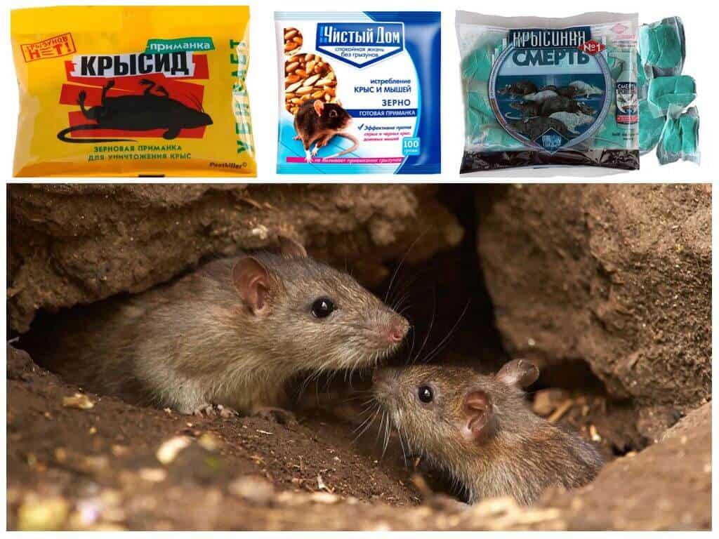 Как избавиться от земляных собачек на огороде. земляная крыса. способы борьбы с китайской собачкой