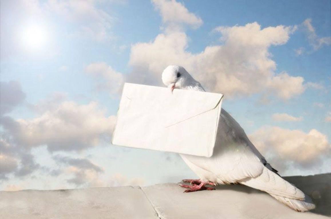 Как ловить голубей: 12 шагов (с иллюстрациями)