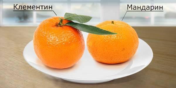 Клементин - это что за фрукт?