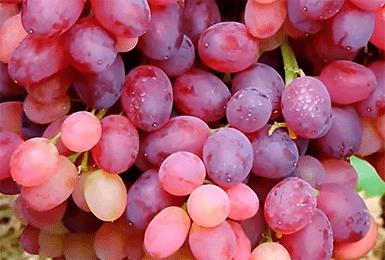 Виноград, названный в честь славянского бога плодородия — мускатный сорт велес