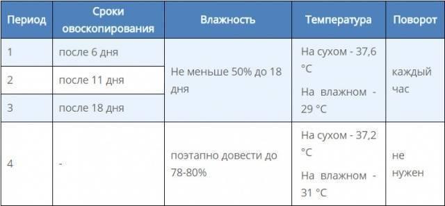 Инкубация яиц цесарки. таблица режимов и температур