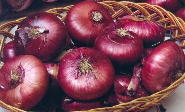 Как выращивать ялтинский лук: когда сажать этот крымский красный сорт в черноземье, средней полосе, подмосковье, как сеять семена на рассаду и уход после посадки