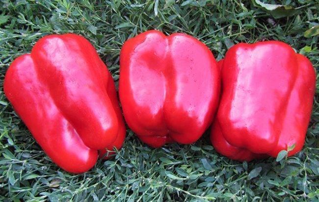 Перец геркулес: характеристика и описание сорта, урожайность с фото