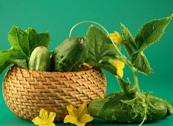 Какие витамины есть в огурцах