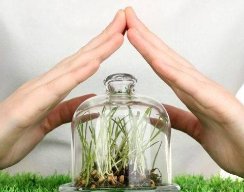 Химическая защита растений от вредителей и болезней