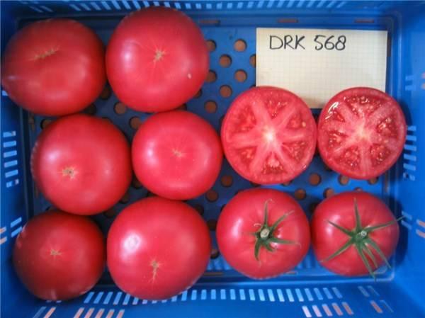 Описание сорта томата биф пинк бренди и уход за ним - всё про сады