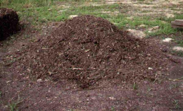 Перепелиный помет как удобрение: как применять, влияние на урожай