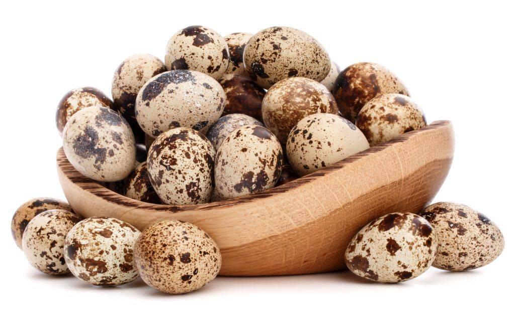 Как несутся перепела: сколько яиц в день несут перепёлки