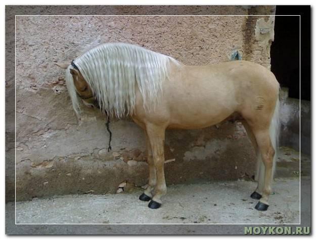 Особенности андалузской лошади