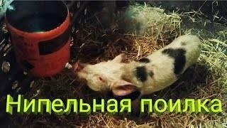 Поилки для свиней — какие бывают и варианты изготовления своими руками