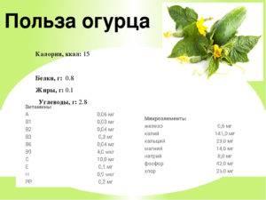Какова калорийность огурца свежего: польза, состав, противопоказания :: syl.ru