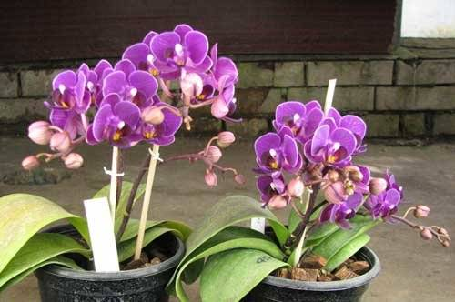 Как пересадить орхидею в домашних условиях: инструкция