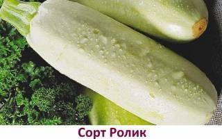 Кабачки - посадка и уход в открытом грунте, правильный полив и удобрение